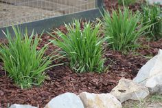 The Basics Of Mulch – What, Where, How and Why To Use In The Garden And Landscape