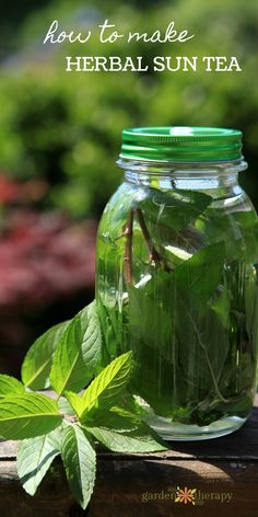 How to make herbal sun tea - with chocolate mint and other flavors fresh from the garden! Sun tea is just about the most simple way to make a summer beverage. Infuse water with flavor in two ways: fresh tea and dried tea. Once you know the steps to making sun tea, the flavor is all up to you and the possibilities are endless. #gardentherapy #suntea #herbs #mint #gardenfresh #tea #recipe