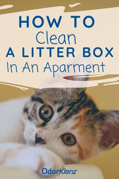 Learn more on how to clean a litter box in an apartment, best type of cat litter to use for odor control, & how to get rid of cat litter smell in an apartment! Litter Box Smell, Cleaning Litter Box, Pet Dander, Pet Odors, Best Litter Box, Different Types Of Cats, Pet Odor Eliminator, Clumping Cat Litter, Dog Smells