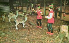 Feeding the deer at Santa's Village, Bracebridge, Muskoka