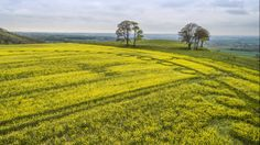 Crop Circles 2017 - Oliver's Castle, Wiltshire, UK - 24th April 2017 - U...