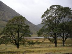 Post WHW - The sites driving on to Brenfield in Argyll country.  #scotland #westhighlandway