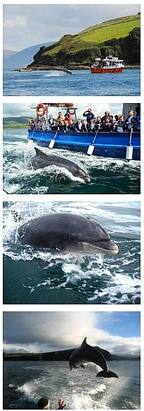 Fungie, The Dingle Dolphin, Ireland