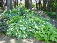 woodland garden ideas - Yahoo Search Results