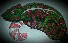 No 11 Casandra White Chameleon