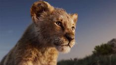 """The Lion King Trailer. From Disney Live Action, director Jon Favreau's all-new """"The Lion King"""" journeys to the African savann John Oliver, Donald Glover, Le Roi Lion 3, Le Roi Lion Film, Watch The Lion King, Lion King Movie, Cgi, Star Trek Into Darkness, Prince Caspian"""