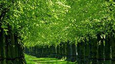 Un día con los pies en la tierra | Green Vivant