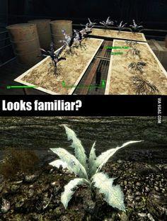 Oh Bethesda... (Fallout meets Skyrim)