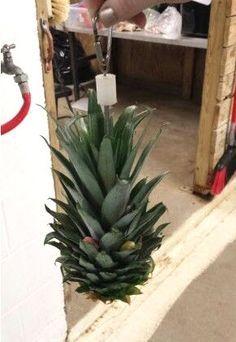 DIY Pineapple Bird Toy - PetDIYs.com