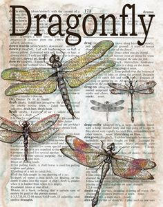 dragonfly mixed media drawing on children's dictionary - flying shoes art studio
