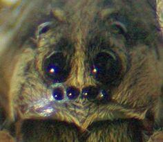 24 best creepy crawly identification images spiders hand spinning rh pinterest com