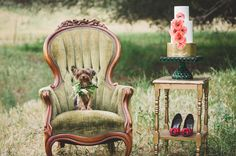toto in vintage green chair