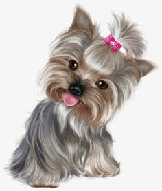 All About The Affectionate Yorkshire Terrier Dogs Cute Puppies, Cute Dogs, Dogs And Puppies, Poodle Puppies, Yorkshire Terriers, Cute Animal Drawings, Cute Drawings, Yorkies, Perro Papillon