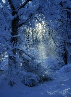 Snow Blue Forest in Winter Winter Szenen, I Love Winter, Winter Magic, Winter Christmas, Winter Blue, Magical Christmas, Winter Sunset, Blue Christmas, Blue Forest