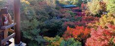 Osaka, Kyoto, Fushimi Inari Taisha, Plants, Travel, Buddhism, Viajes, Destinations, Plant