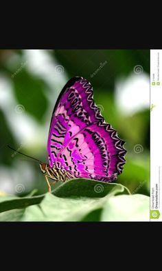 More beautiful butterflies