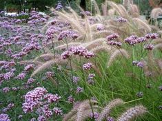 My Favorite Plant Combinations 20