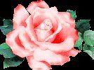 Alibabki  - Kwiat jednej nocy w wykonaniu kwiatuszek1968