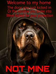 Beware of dog #Rottweiler