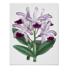 Purple Orchid #4 Flower Botanical Art Poster