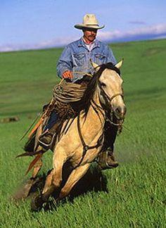 Spanish Mustang History