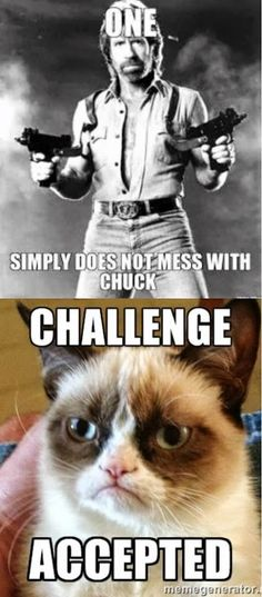 One does not simply mess with Chuck. Challenge accepted Grumpy Cat Quotes, Grumpy Cat Humor, Cat Memes, Funny Memes, Hilarious, Grump Cat, Grumpy Kitty, Jokes, Funny Animal Photos
