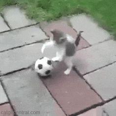 Soccer Kitten