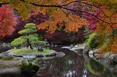 Japanese garden The Element Water The element water is one of the most imp. Japanese Plants, Japanese Landscape, Japanese Gardens, Japanese Water, Landscape Design, Garden Design, Japanese Stone Lanterns, The Pleasure Garden, Gravel Landscaping