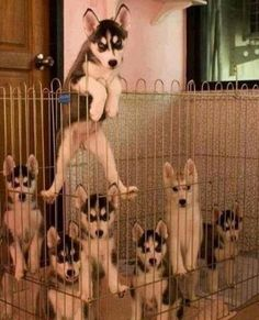Dogs That Are Trying To Escape – 12 Funny Pics