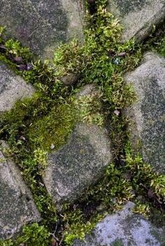 How+to+Clean+Moss+From+a+Brick+Patio+With+Bleach+