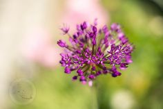 flower by Zlatica Rybárová on 500px