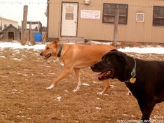 Dixie playing with her foster sister.