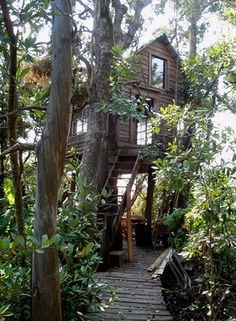 Amazing and Awesome Tree Houses ~ Now That's Nifty