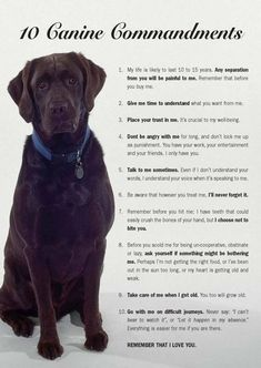 10 Canine Commandments that every dog owner should follow. THIS SHOULD BE LAW!!