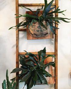 Pin di silvana guglielmi su giardini creazioni piante d for Creazioni giardini