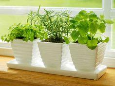 Yrttien kasvatus aloitetaan siemenistä tai hennoista taimista. Yrteille riittää sama hoito kuin monelle muullekin kasville eli valo, vesi ja ravinteet. Yrttien...