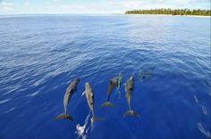Micronesia - Marshall Islands