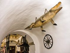 Brněnský Drak a kolo Draco, Czech Republic, Most Beautiful Pictures, Folk Art, Ale, Cities, Culture, Dragonair, Popular Art