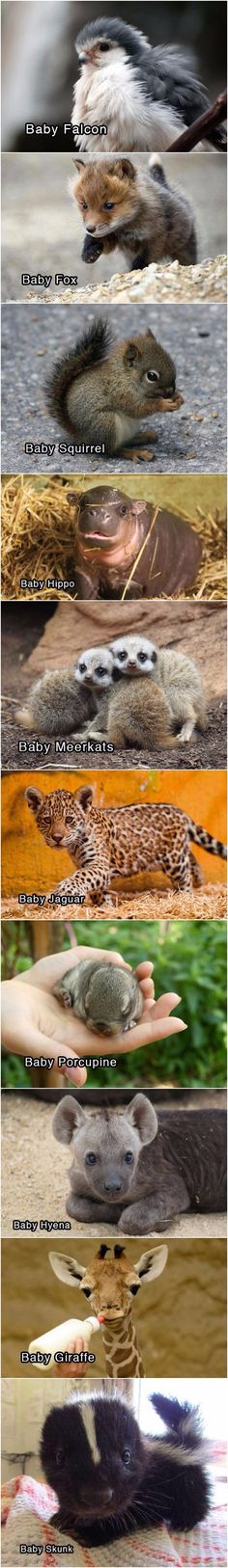 Adorable Baby Animals Funny Baby Animals, Cutest Baby Animals, Baby Wild Animals, Baby Animals Pictures, Cute Little Animals, Cute Animal Pictures, Animals And Pets, Strange Animals, Funny Pictures