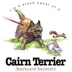 Cairn Terrier Dog Funny HEAT PRESS TRANSFER for T Shirt Sweatshirt Fabric 825b #AB