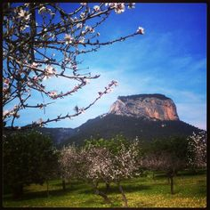 Almendro y Sierra / Almond tree and montain.  By Daudiovisual.
