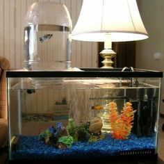 Nice freshwater tank.  Not exactly the most amazing tank in terms of decor, but I like the water tower concept.