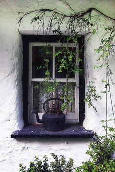 Tea Kettle On The Window Ledge