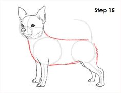 Learn how to draw a chihuahua dog with this how-to video and step-by-step drawing instructions. Chihuahua Drawing, Chihuahua Art, Puppy Drawing, Chihuahua Quotes, Animal Sketches, Animal Drawings, Cool Drawings, Drawing Stuff, Drawing Activities