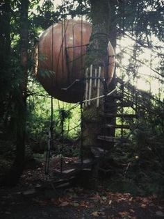 Free Spirit Spheres - stay in a suspended spherical treehouse on vancouver island