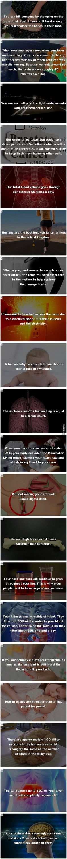 We have rounded up some interesting, yet true, facts about the human body. I don't think all of these are true! Wtf Fun Facts, True Facts, Crazy Facts, Random Facts, Random Stuff, Strange Facts, Funny Facts, Pointless Facts, Odd Facts