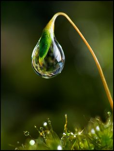 Single Droplet On Moss by Jack Hood, via Flickr