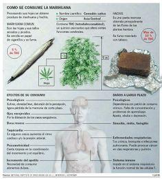 Los efectos de la #marihuana sobre el organismo. #salud #DudasDeSalud https://www.saluspot.com/preguntas/15899-cuanta-marihuana-hay-que-fumar-para-que-se-considere-danina-para-la-salud-una-vez-a-la-semana-es-perjudicial