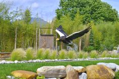 Aquila di Mare Steller by Welbis Pestana on