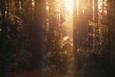 Przez rok zbierzemy galerię 52 fotografii pokazujących jak można spędzać czas w lesie i wokół lasu.